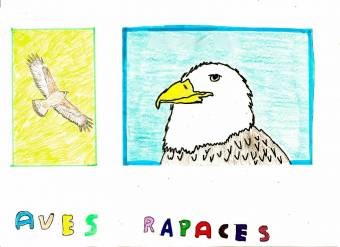 16.- AVES RAPACES.