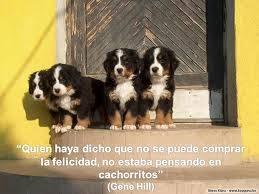 El que dijo que no se puede comprar la felicidad no estaba pensando en cachorritos