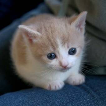 gatito 1