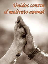 VOY A FIRMAR EL PACTO Y ACABAR EL MALTRATO ANIMAL